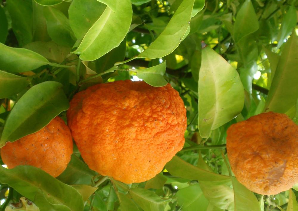 корисні властивості помаранча